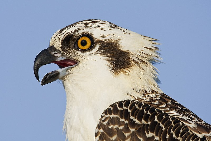 The Osprey Words About Non Duality