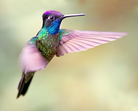 The Hummingbird Words About Non Duality